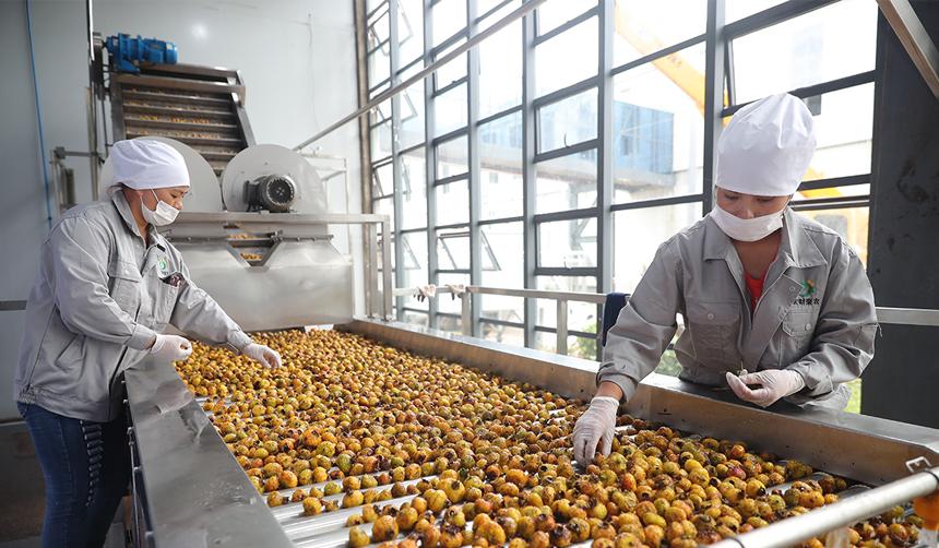刺梨加工生産