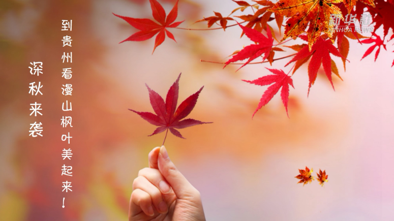 深秋來襲 到貴州看漫山楓葉美起來!
