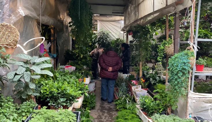 貴陽城市記憶——陽明花鳥市場