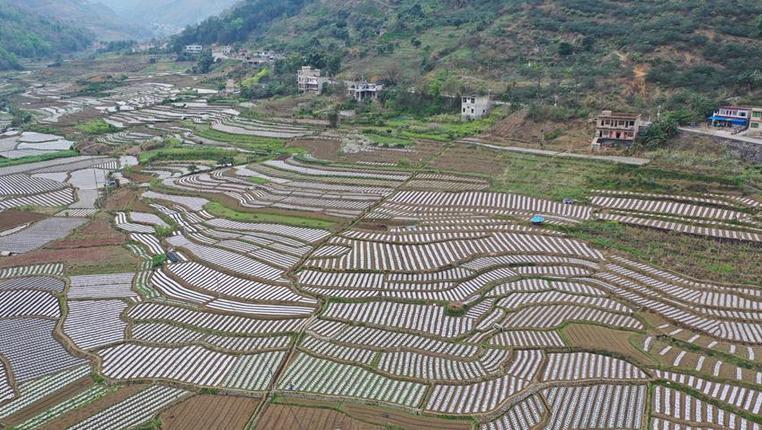 貴州:高原春耕圖