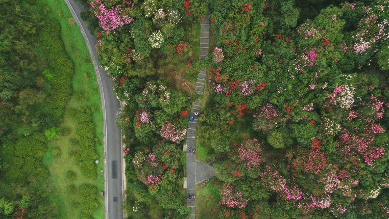 田園春景:百裏杜鵑花似錦