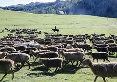 """好品質讓牛産業""""牛""""起來"""