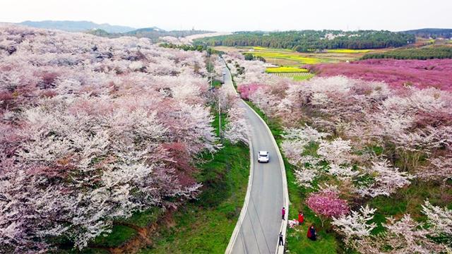 貴州:一路繁花相伴