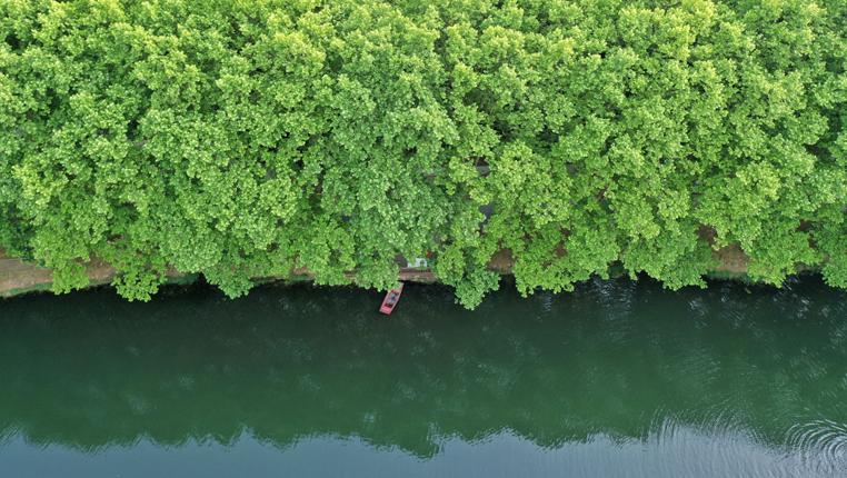 貴陽:初夏濕地景如畫