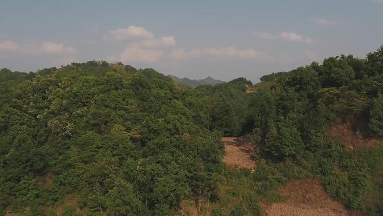 貴州小山村走上養牛致富路