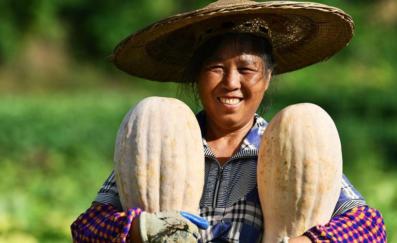 貴州思南:壩區迎豐收