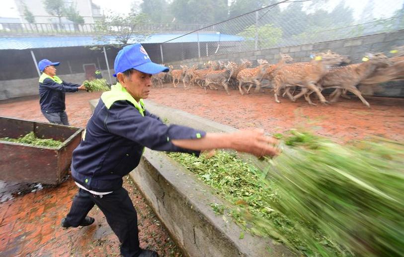 貴州綏陽:梅花鹿養殖業帶動群眾致富
