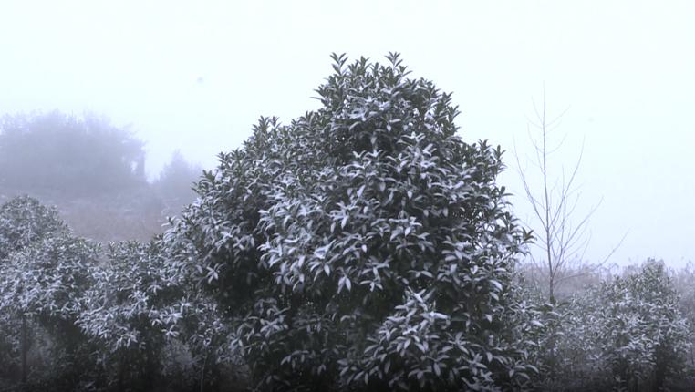 貴州多地迎來今冬首場降雪