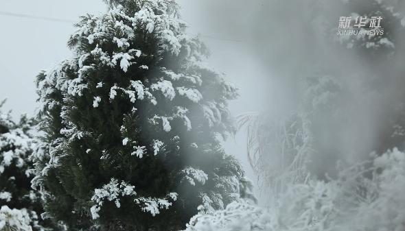 瓊樹銀花!貴州烏蒙山現霧凇景觀