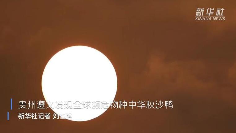 貴州遵義發現全球瀕危物種中華秋沙鴨