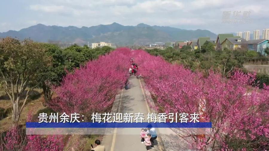 貴州余慶:梅花迎新春 梅香引客來