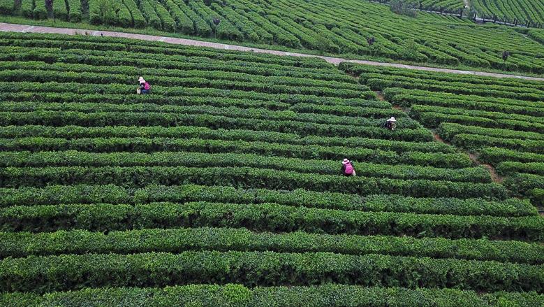 航拍中華茶博園
