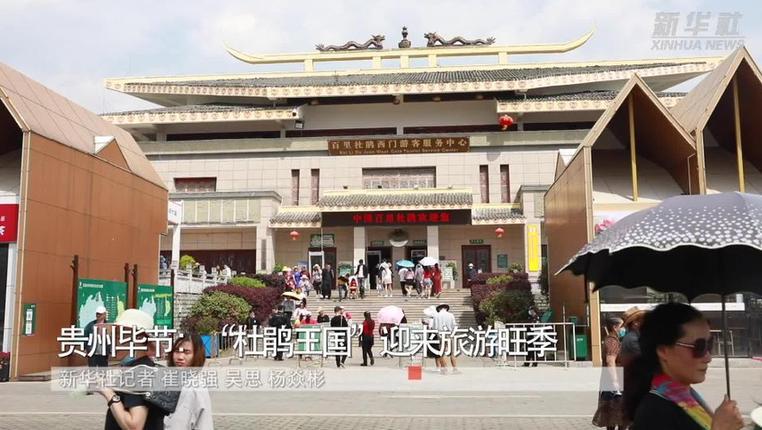 """貴州畢節:""""杜鵑王國""""迎來旅遊旺季"""