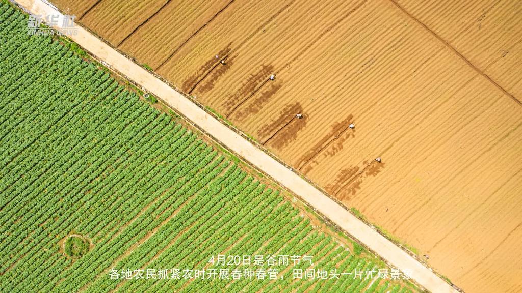 微視頻丨谷雨農忙