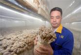 貴州玉屏:規模食用菌産業助力鄉村振興