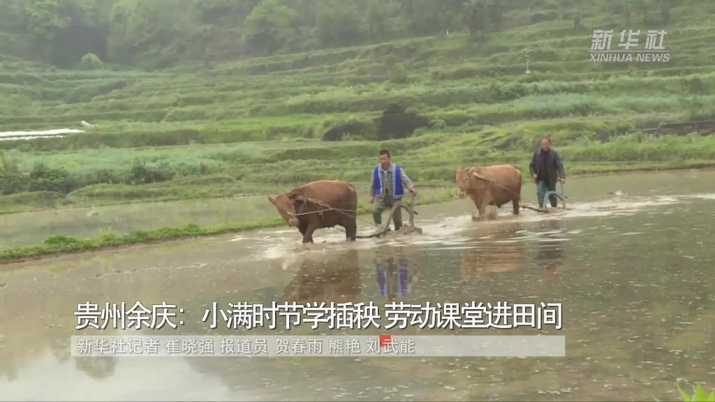 貴州余慶:小滿時節學插秧 勞動課堂進田間