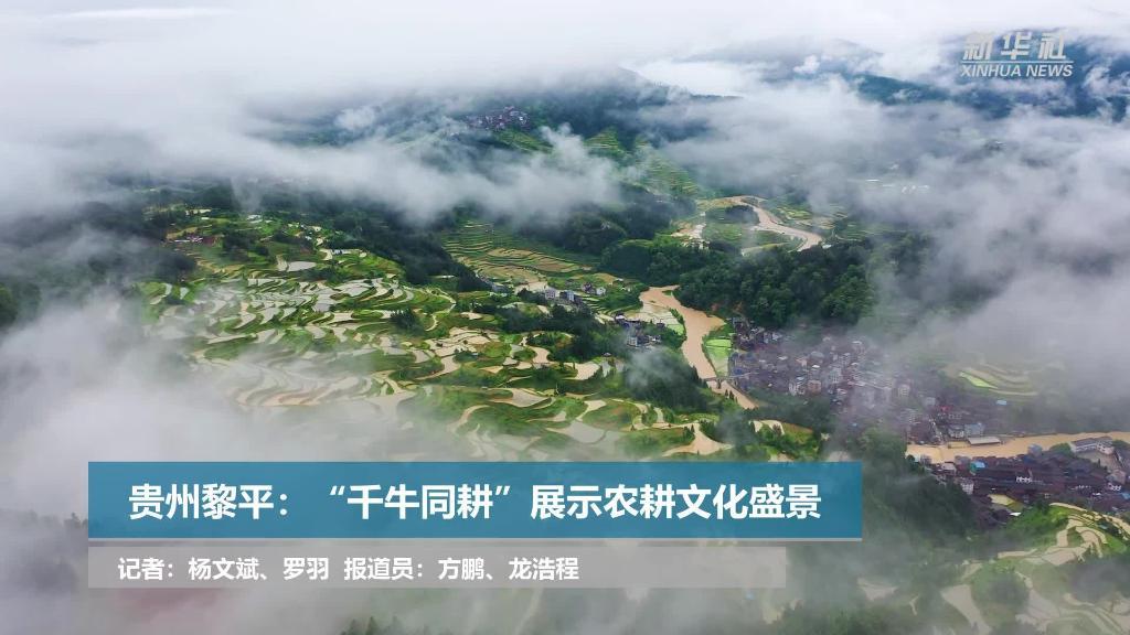 """微視頻丨貴州黎平:""""千牛同耕""""展示農耕文化盛景"""