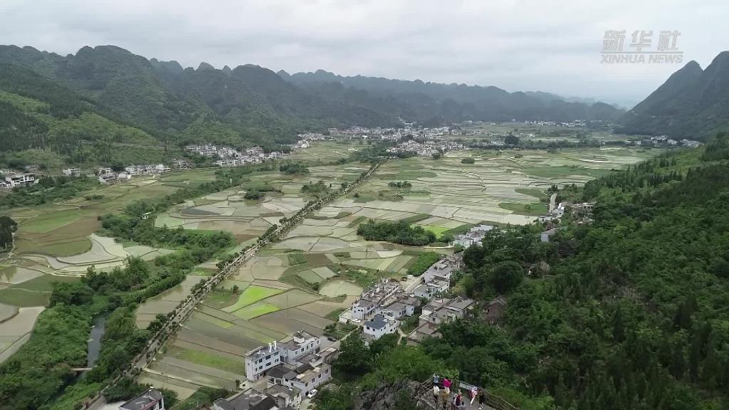 貴州興義:萬峰林下插秧忙 稻田風景別樣美