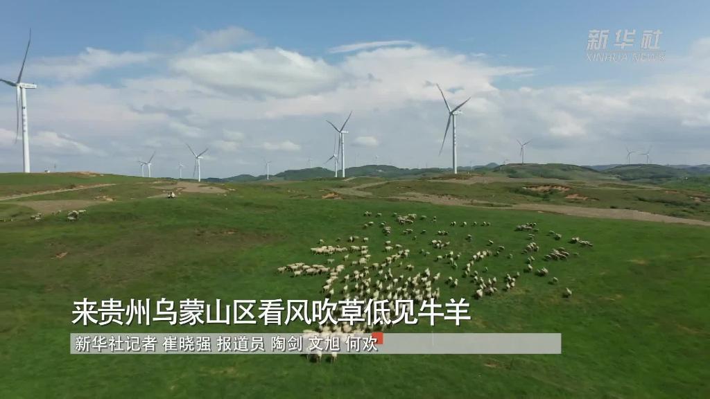 來貴州烏蒙山區看風吹草低見牛羊