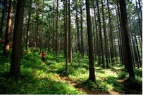 夜郎國家森林公園之三