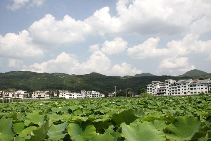 永靖鎮陽朗觀光農業