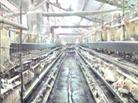 後寨鄉發展畜牧業養殖業
